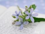 flower_summer_s